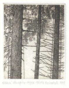 Drzewa 8x6_5